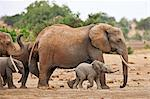 Elephants heading to a waterhole in Tsavo East National Park. Stock Photo - Premium Rights-Managed, Artist: AWL Images, Code: 862-06542176