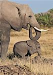 A baby elephant plays on a mound watched over by its mother. Stock Photo - Premium Rights-Managed, Artist: AWL Images, Code: 862-06542231