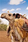 Merti, Northern Kenya. A child on top of a camel as a nomadic family migrates. Stock Photo - Premium Rights-Managed, Artist: AWL Images, Code: 862-06542282