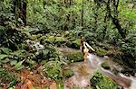 Wading across a creek at Parque Nacional de Amistad near Boquete, Panama, Central America. Stock Photo - Premium Rights-Managed, Artist: AWL Images, Code: 862-06542645