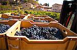 Harvest season in Briones, La Rioja, Spain Stock Photo - Premium Rights-Managed, Artist: AWL Images, Code: 862-06542858