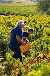 Harvest season in Briones, La Rioja, Spain Stock Photo - Premium Rights-Managed, Artist: AWL Images, Code: 862-06542869