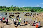 Sri Lanka, Pinnewala Elephant Orphanage near Kegalle, elephants bathing Stock Photo - Premium Rights-Managed, Artist: AWL Images, Code: 862-06543019