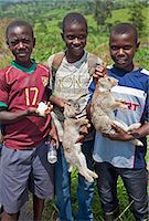Young boys take rabbits and a guinea pig to sell at a roadside market on the road between Fort Portal and Kasese, Uganda, Africa Stock Photo - Premium Rights-Managednull, Code: 862-06543209