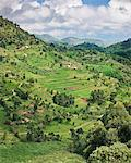 Rich farming country in the rolling hills of Southwest Uganda, Africa Stock Photo - Premium Rights-Managed, Artist: AWL Images, Code: 862-06543258