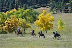 Buffalo Roundup in Custer State Park, Black Hills, South Dakota, USA Stock Photo - Premium Rights-Managed, Artist: AWL Images, Code: 862-06543393