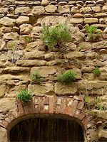 green plants growing out of stone bricks in wall above old arched doorway in the small medieval village of Saint-Antoine-l'Abbaye, France Stock Photo - Premium Rights-Managednull, Code: 700-06543492