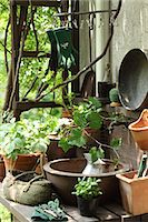 Plants and gardening tools Stock Photo - Premium Royalty-Freenull, Code: 622-06548688