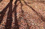 Tree shadows on the ground Stock Photo - Premium Royalty-Free, Artist: JTB Photo, Code: 622-06549427