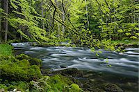 streams scenic nobody - Spring Foliage along Orbe River, Vallorbe, Jura Mountains, Canton of Vaud, Switzerland Stock Photo - Premium Royalty-Freenull, Code: 600-06553323