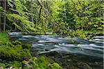 Spring Foliage along Orbe River, Vallorbe, Jura Mountains, Canton of Vaud, Switzerland Stock Photo - Premium Royalty-Free, Artist: Martin Ruegner, Code: 600-06553323