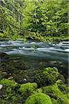 Spring Foliage along Orbe River, Vallorbe, Jura Mountains, Canton of Vaud, Switzerland Stock Photo - Premium Royalty-Free, Artist: Martin Ruegner, Code: 600-06553324