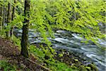 Spring Foliage along Orbe River, Vallorbe, Jura Mountains, Canton of Vaud, Switzerland Stock Photo - Premium Royalty-Free, Artist: Martin Ruegner, Code: 600-06553326