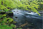Spring Foliage along Orbe River, Vallorbe, Jura, Jura Mountains, Switzerland