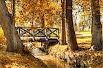 Autumn scenery. Beautiful gold fall in park. Stock Photo - Royalty-Free, Artist: satariel                      , Code: 400-06556555