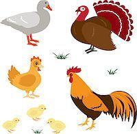 Farm birds vector set isolated on white Stock Photo - Royalty-Freenull, Code: 400-06557674