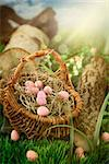 Colorful Easter eggs. Holiday nature concept with easter hunt. Eggs in the sunny meadow Stock Photo - Royalty-Free, Artist: mythja                        , Code: 400-06567944