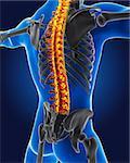 3D medical man with skeleton spine highlighted
