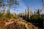Landscape of dead trees fallen by bark beetles in autumn in the Bavarian forest, Bavaria, Germany. Stock Photo - Premium Royalty-Free, Artist: David & Micha Sheldon, Code: 600-06571148