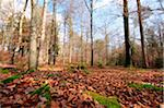 Landscape of a mixed forest in autumn, Bavaria, Germany. Stock Photo - Premium Royalty-Free, Artist: David & Micha Sheldon, Code: 600-06576254
