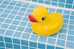 Rubber duck Stock Photo - Premium Royalty-Free, Artist: Aflo Relax, Code: 6114-06591484