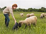A farmer feeding sheep Stock Photo - Premium Royalty-Free, Artist: Cultura RM, Code: 6114-06591687