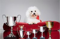 Dog with a row of trophies Stock Photo - Premium Royalty-Freenull, Code: 6114-06591881