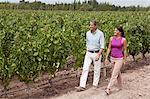 Couple walking in vineyard Stock Photo - Premium Royalty-Freenull, Code: 6114-06598493