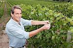 Mature man in a vineyard Stock Photo - Premium Royalty-Freenull, Code: 6114-06598524