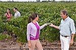 People in a vineyard Stock Photo - Premium Royalty-Freenull, Code: 6114-06598529