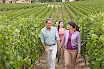 People walking through vineyard Stock Photo - Premium Royalty-Freenull, Code: 6114-06598535