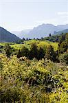 Forest landscape in bariloche area of argentina Stock Photo - Premium Royalty-Free, Artist: CulturaRM, Code: 6114-06598917