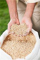 Farmer holding soybeans Stock Photo - Premium Royalty-Freenull, Code: 6114-06598937
