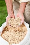 Farmer holding soybeans Stock Photo - Premium Royalty-Free, Artist: Blend Images, Code: 6114-06598937