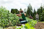 Woman picking vegetables and man using cultivator in field Stock Photo - Premium Royalty-Free, Artist: Raimund Linke, Code: 6114-06599882