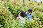 Young couple picking raspberries Stock Photo - Premium Royalty-Free, Artist: Photocuisine, Code: 6114-06599904
