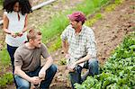 Three people looking at vegetable crop on farm Stock Photo - Premium Royalty-Free, Artist: Blend Images, Code: 6114-06599906