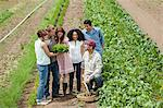 People looking at vegetable crop on farm Stock Photo - Premium Royalty-Free, Artist: Andrew Kolb, Code: 6114-06599936