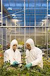 Scientists inspecting plants Stock Photo - Premium Royalty-Free, Artist: Blend Images, Code: 6114-06603140