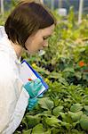 Scientist inspecting plants Stock Photo - Premium Royalty-Free, Artist: Cultura RM, Code: 6114-06603148