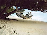 Hammock hanging from tree Stock Photo - Premium Royalty-Freenull, Code: 6114-06608054