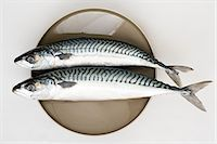 smelly - Mackerel Stock Photo - Premium Royalty-Freenull, Code: 6114-06609386