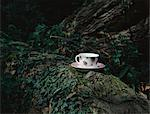 Teacup on a log Stock Photo - Premium Royalty-Free, Artist: Cultura RM, Code: 6114-06612023