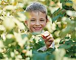 Boy picking a strawberry Stock Photo - Premium Royalty-Freenull, Code: 6114-06612081