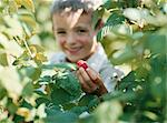 Boy holding a raspberry Stock Photo - Premium Royalty-Freenull, Code: 6114-06612107