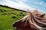 Tilt shot of horse's head and green land at Iceland Stock Photo - Premium Royalty-Free, Artist: Blend Images, Code: 698-06615387