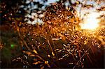 Selective focus of sunlight falling on plants Stock Photo - Premium Royalty-Freenull, Code: 698-06615393
