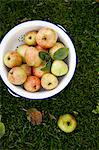 Directly above shot of apples in colander on grass Stock Photo - Premium Royalty-Free, Artist: Cultura RM, Code: 698-06615463