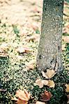 Tree trunk with autumn leaves Stock Photo - Premium Royalty-Free, Artist: Cultura RM, Code: 698-06615771