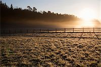 fog (weather) - View of grassy land and animal pen Stock Photo - Premium Royalty-Freenull, Code: 698-06615793